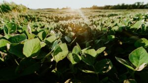 Why soy is healthy – 7 myths debunked